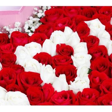 情人节送花,不同玫瑰朵数的含义分别是什么?