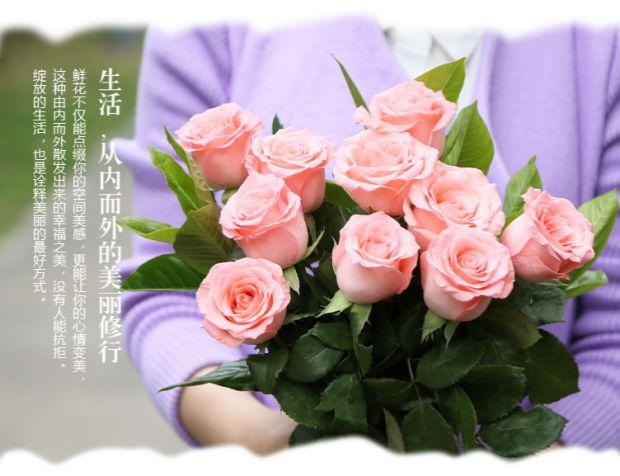 不同朵数戴安娜玫瑰花语是什么?