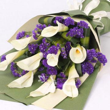 马蹄莲代表什么,马蹄莲的花语是什么?