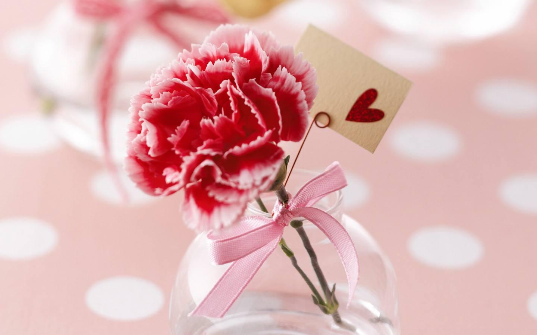 不同颜色的康乃馨花语大全