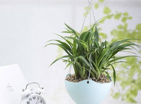 适合室内养的七种花卉