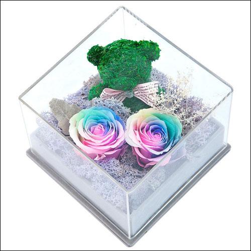 非洲菊各色花语图片