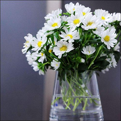 雏菊的花语是什么?雏菊适合送什么人?