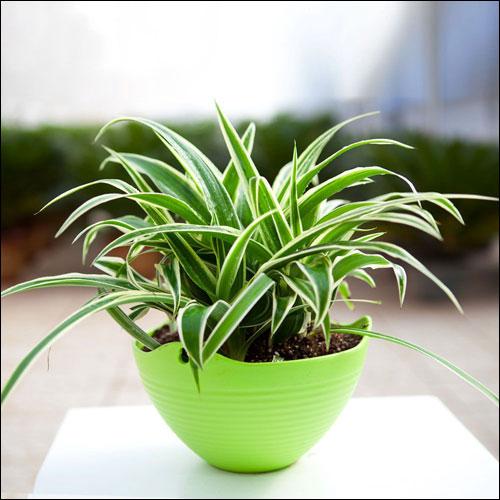 卧室放什么植物最好?卧室植物风水禁忌?