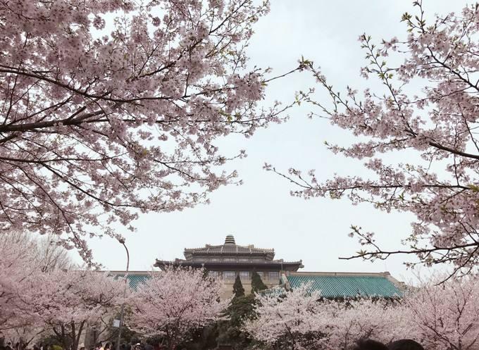 武汉大学附近鲜花店买花,武汉大学周围的鲜花店订花