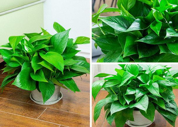适合室内养植的植物盆栽有哪些?