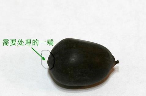 碗蓮的種植方法和注意事項