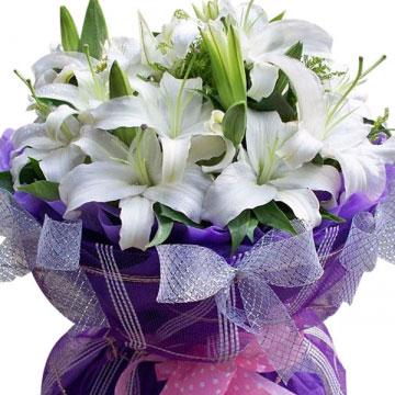 白百合花代表什么