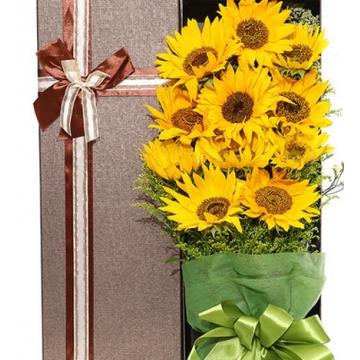 太陽花的花語是什么,送太陽花代表什么意思?