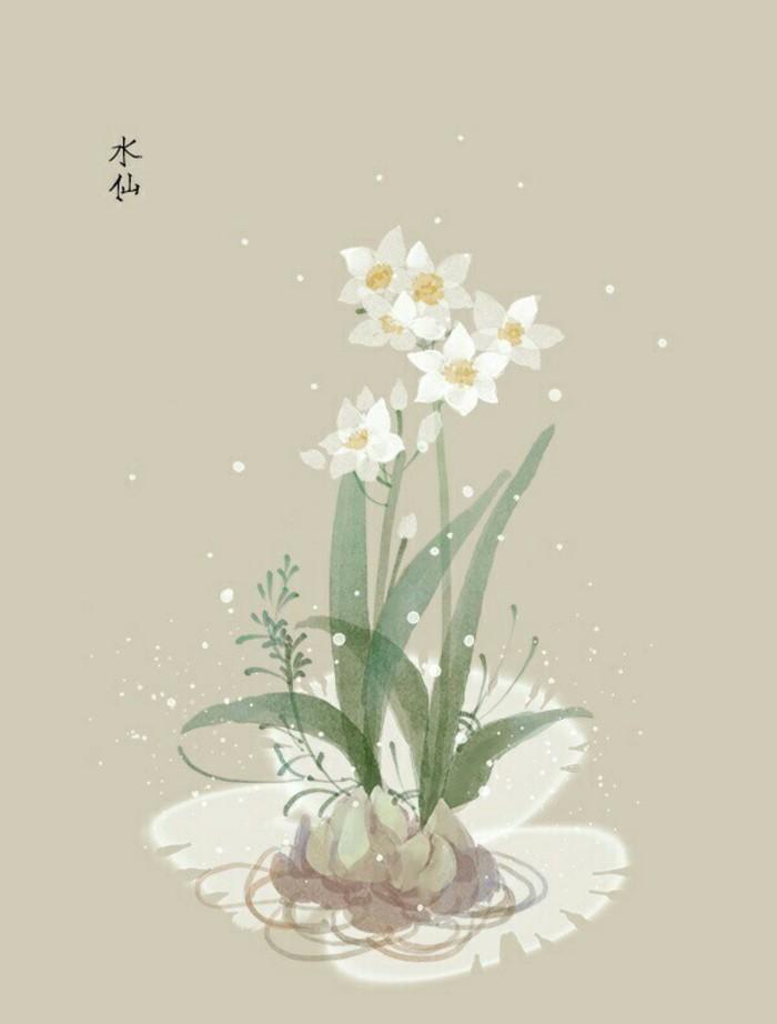 水仙花的花语是什么,水仙花的象征意义是什么