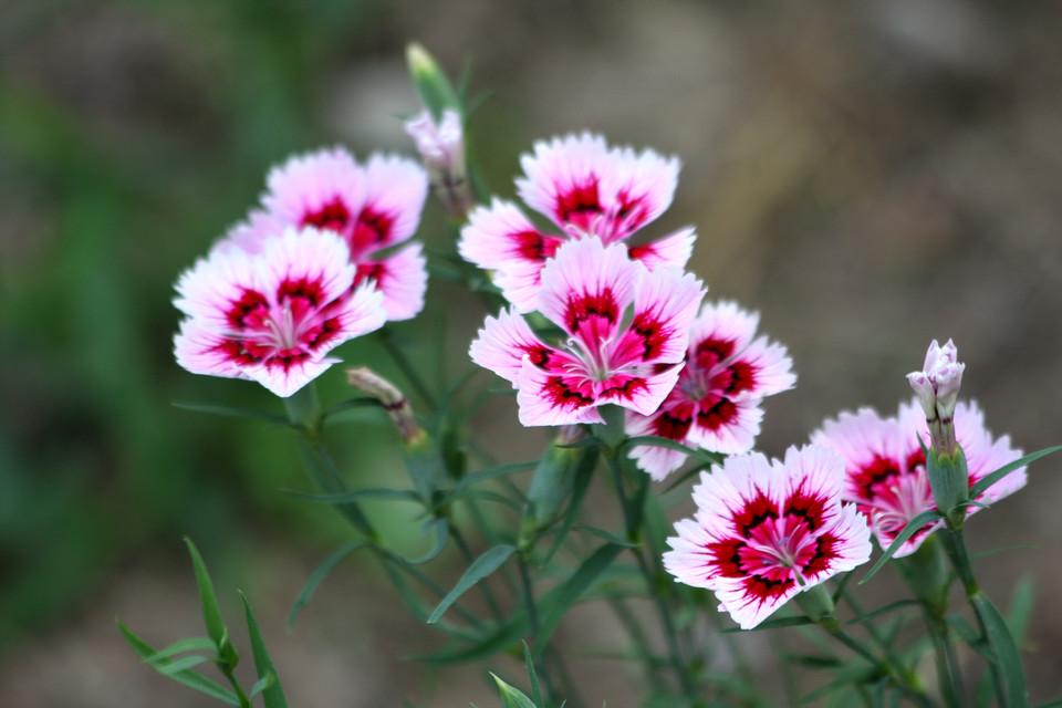 适合室内养的八种花卉
