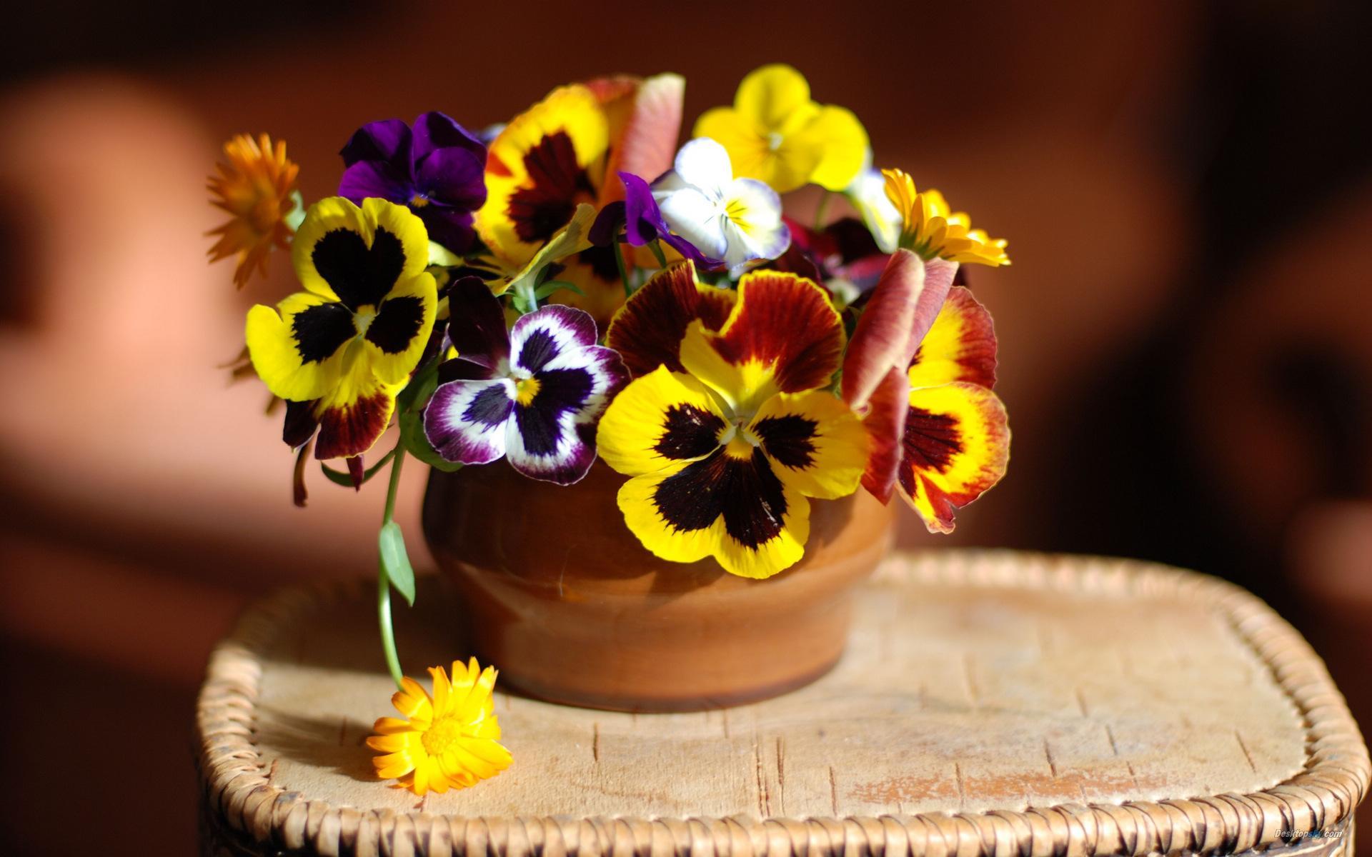 三色堇的花语,三色堇的传说