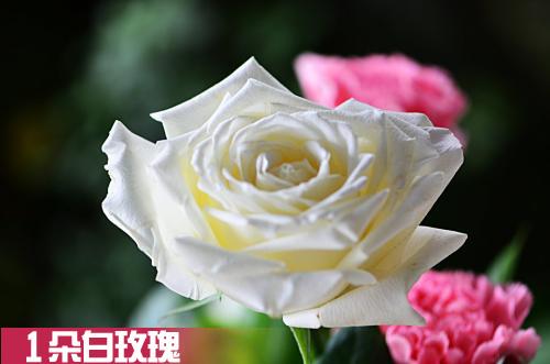 送白玫瑰代表什么意思