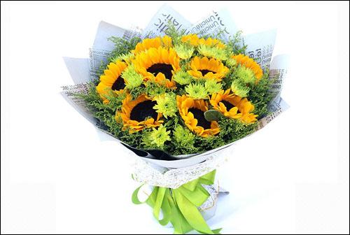 盆栽向日葵怎么养