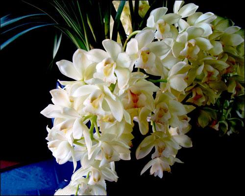 中国兰花的品种大去及图片