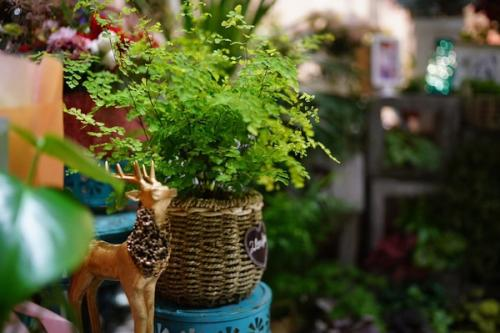 乌鲁木齐花店