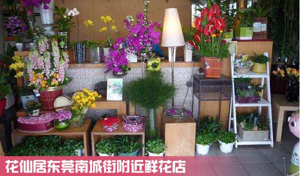 东莞南城街附近鲜花店