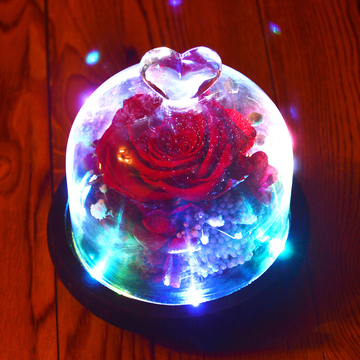 玫瑰陛下 红色